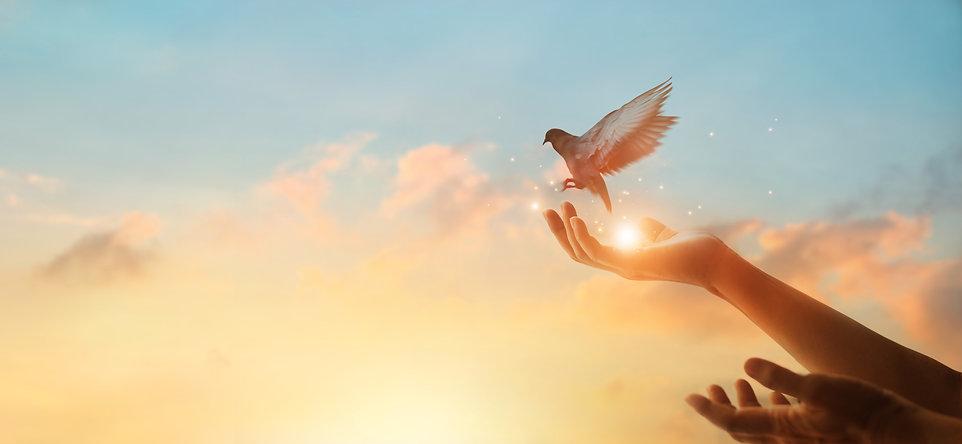 Woman praying and free bird enjoying nat