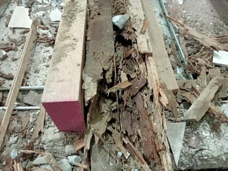 How Termites Find Wood l Pest Assassins Cebu