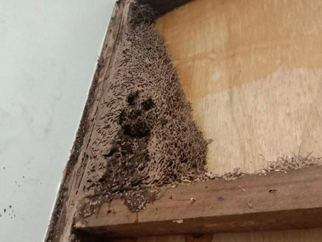 How To Spot Termite Problems On Your Cebu Property