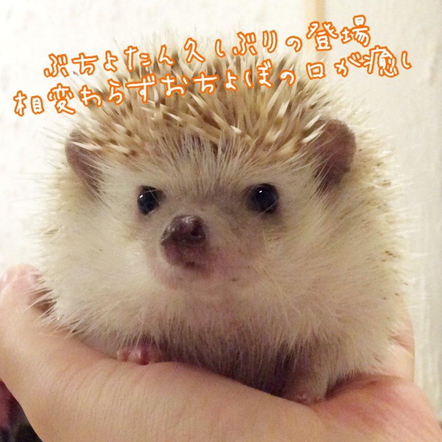 ハリネズミ(hedgehog)
