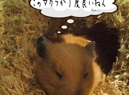 """1月後半!いっくぞー!ハリ""""学""""日記♪"""