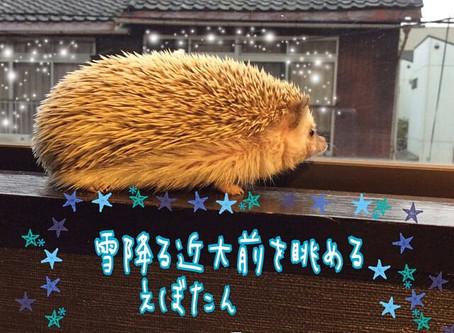 念願の雪!ハリ日記♪
