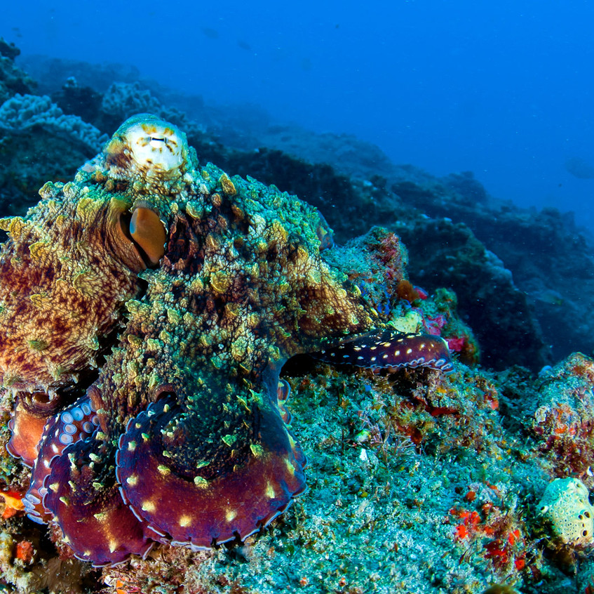 8. East African Coral Reefs