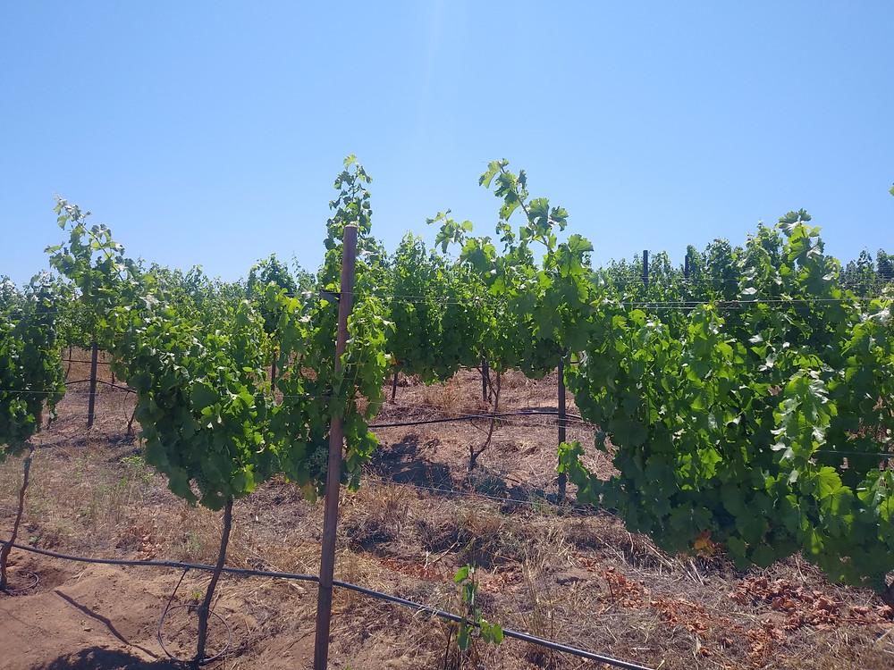Review: Crossing South: Baja Wine Tours ; Baja California Wine Tours; San Diego