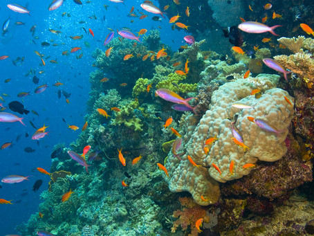 10 Beautiful Coral Reefs In The World