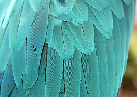 blue-parrot-feathers-background_36043-56