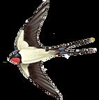 BIRD 2nd .ExteriorElement logo transpare