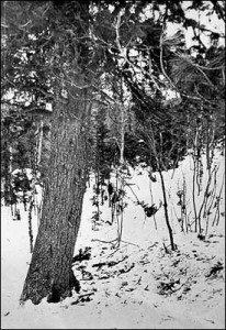 Dyatlov Pass Incient