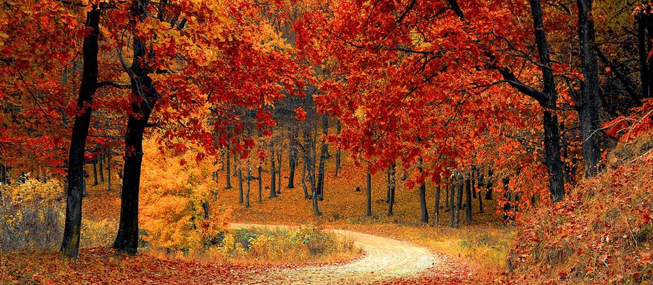 10 Reasons Fall Is The Best Season In The Okanagan