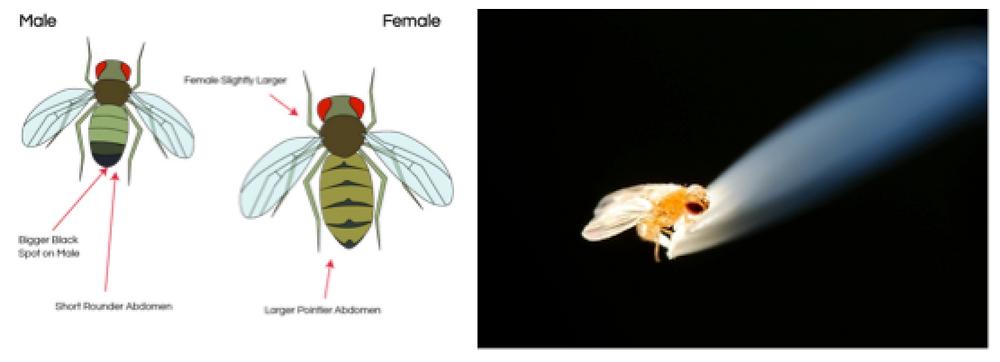 Gender Bees