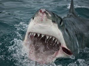 A fucking shark
