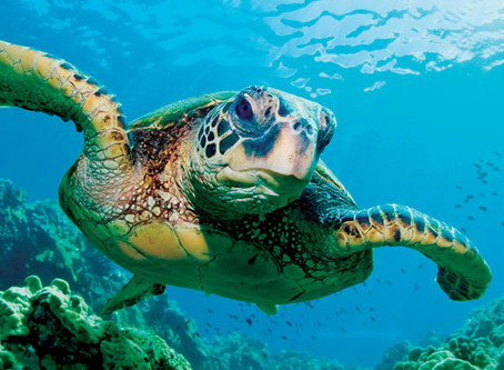 Atheist Life Hacks: How To Make Friends With Sea Turtles