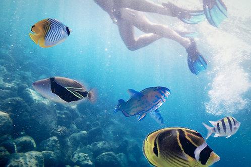 Snorkeler/Ocean View/Share a Room