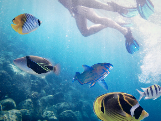 Scuba Diving and Snorkeling from Cape San Blas