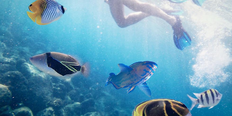 潛水分享圈