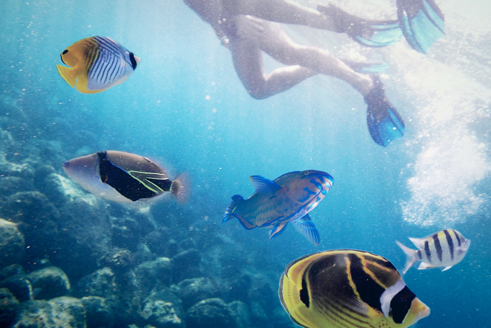 Snorkeling in a Tropical Paradise