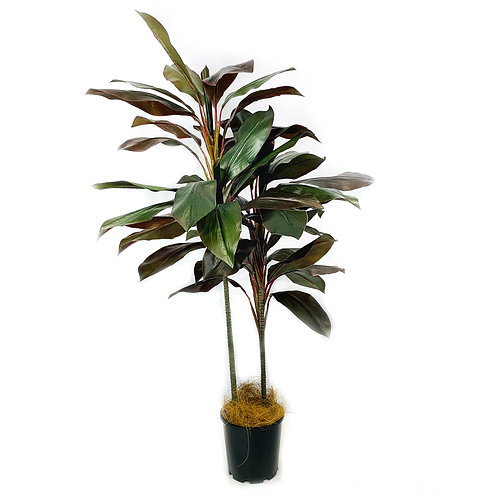 Artificial Cordyline Tree