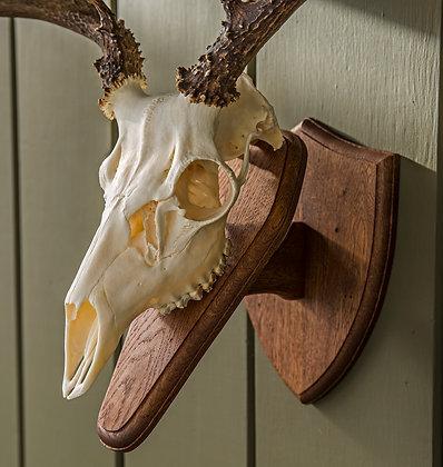 Deer Skull Plaque (GFD)