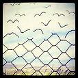 Sparrow Birds Fence freedom.jpg
