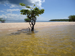 Tapajós, Manaus • Brazil