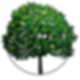 Treemaster-icon-new-clear-circle.png