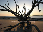Artistic Driftwood Sunrise BGI.jpg