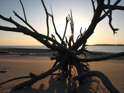Artistic Driftwood Sunrise -400.JPG