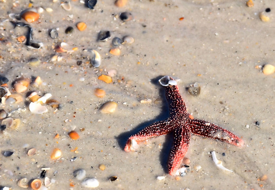 Starfish 00989.jpg