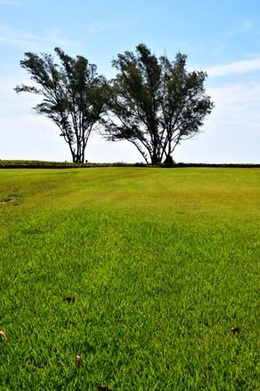 Two Trees on Meadow 15304.jpg