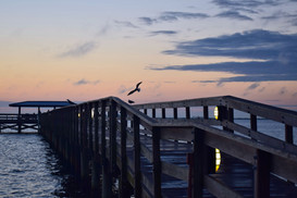 Bird Landing on Pier at Dawn 19867.jpg