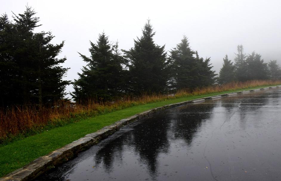 Misty Evergreens 02748.JPG