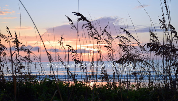Sea Oats at Sunrise BGI 00043.jpg