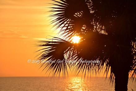 Sun Through Palm Tree BGI 17194.jpg