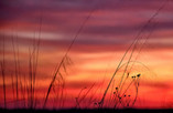 Fire Behind the Reeds  00184.jpg
