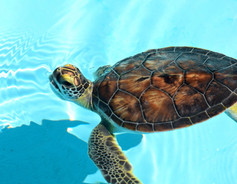 Turtle Close-Up 18709.jpg