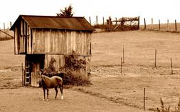 Horse with Barn Sepia 2650s.jpg