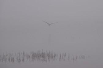 Foggy Morning Bird Watching 00140.jpg