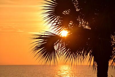 Sun Through Palm Tree 17194.jpg