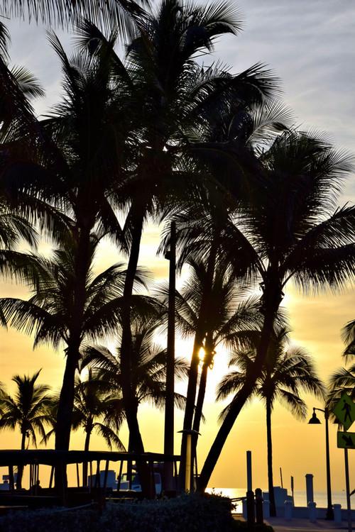 Golden Palm Sunrise 15206.jpg