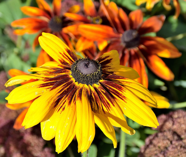Fall Flowers 01795.JPG