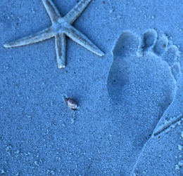 708x665 Barefoot Print with Starfish.jpg