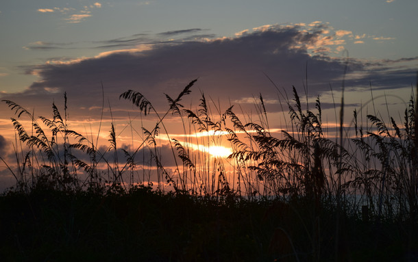 Beach Sea Oats at Dawn 00050.JPG