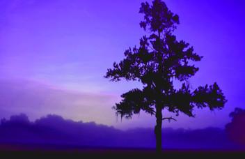 Colorized Purple Haze Tree  00827.jpg