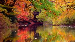 Fall Mountain Stillness 02455.jpg