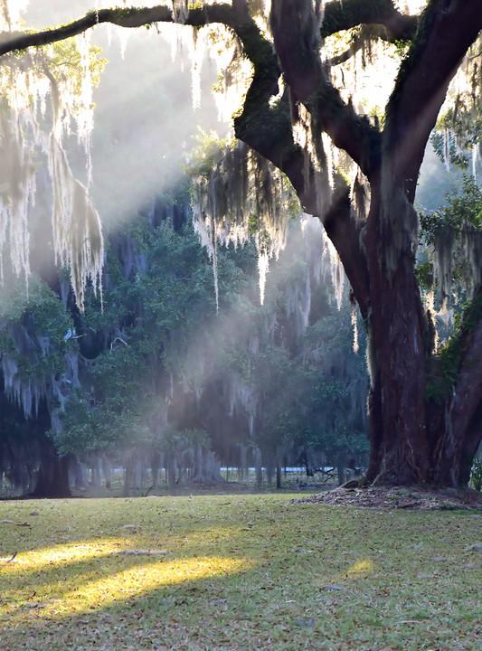 Sunlit Ancient Oak 00918.jpg