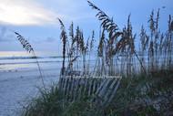 Sea Oats with Sand Fence BGI 00555 - Cop