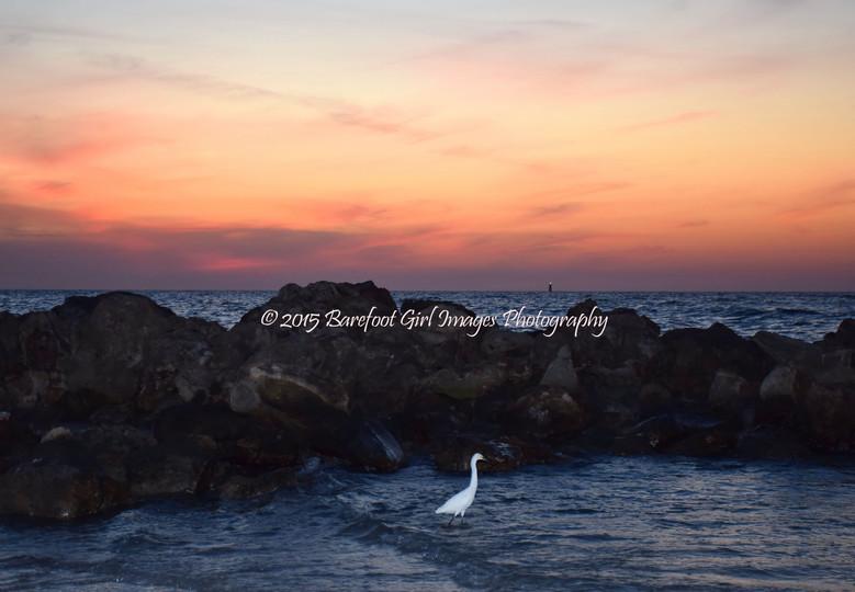 Bird and Rocks at Sunset 20517 BGI.jpg