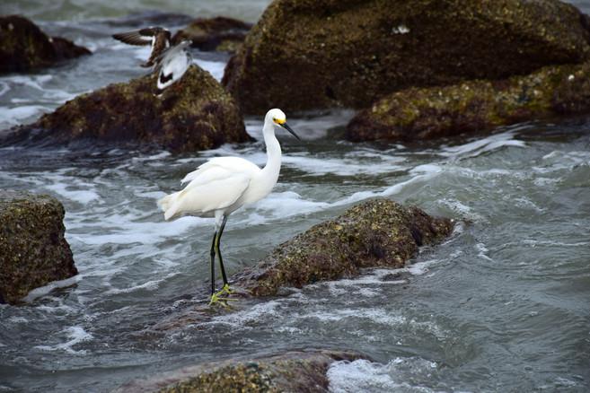White Bird on Rocks 20572.jpg