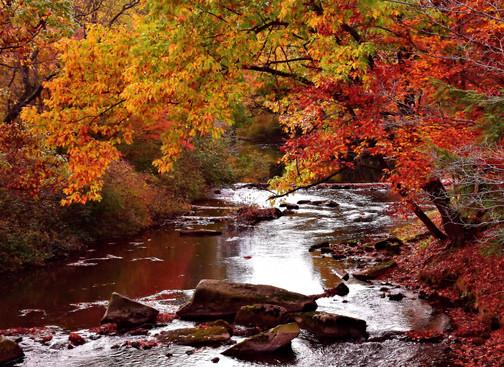 Fall Mountain Stream 02442.JPG