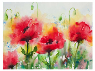 Four Red Poppies (K69)